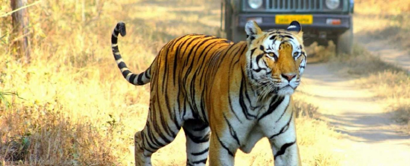 Ranthambore National Park
