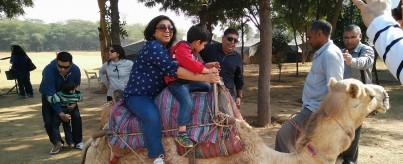 Camel Safari Near Delhi, Gurgaon (Aravali Hills)
