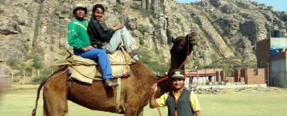 Camel Safari at Camp Wild
