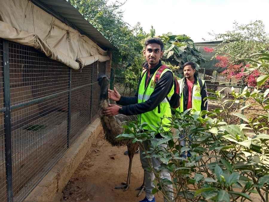 Animal_Orphanage 503