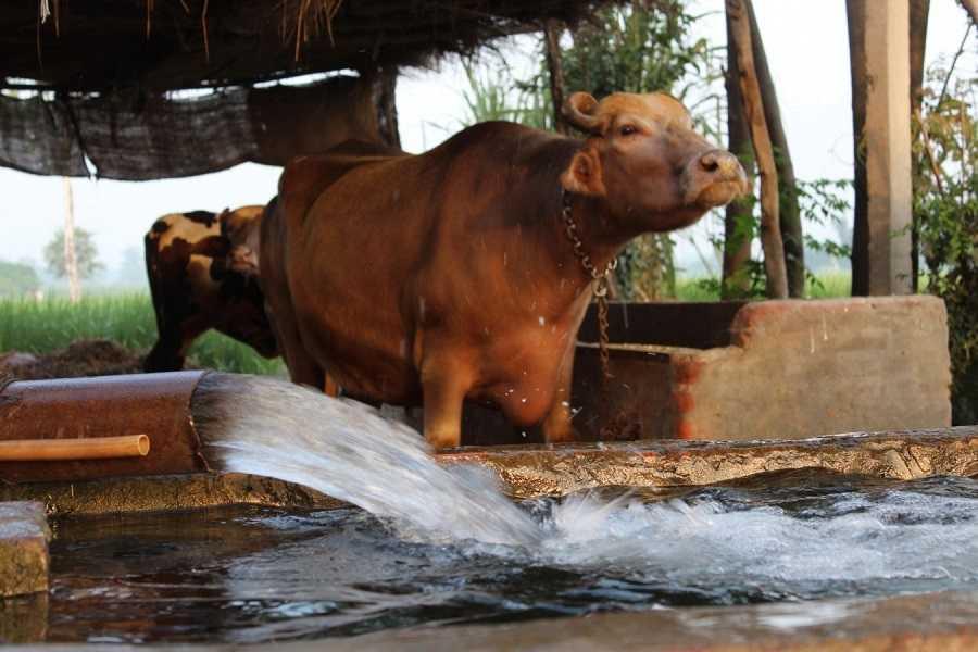 Dairy_Farming 512