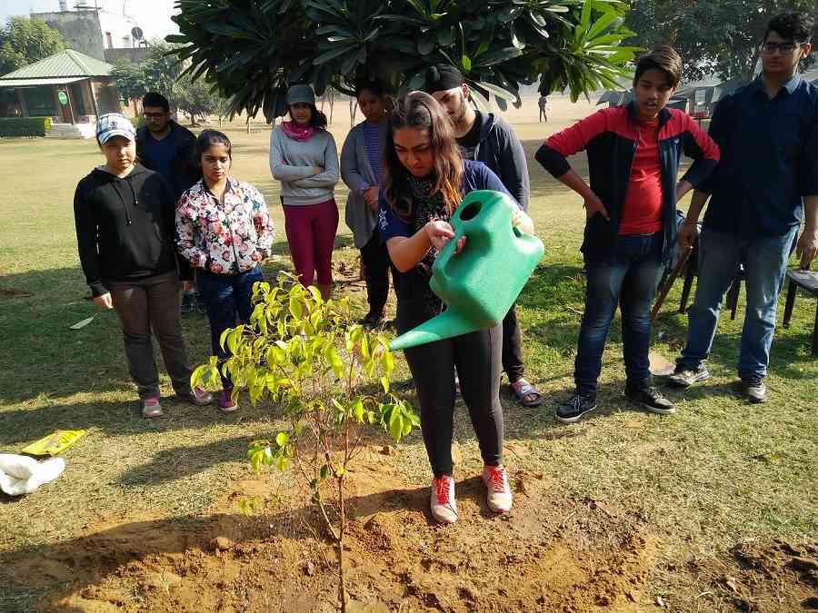 Tree_plantation 502