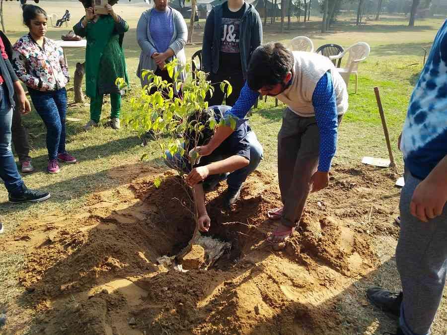Tree_plantation 503