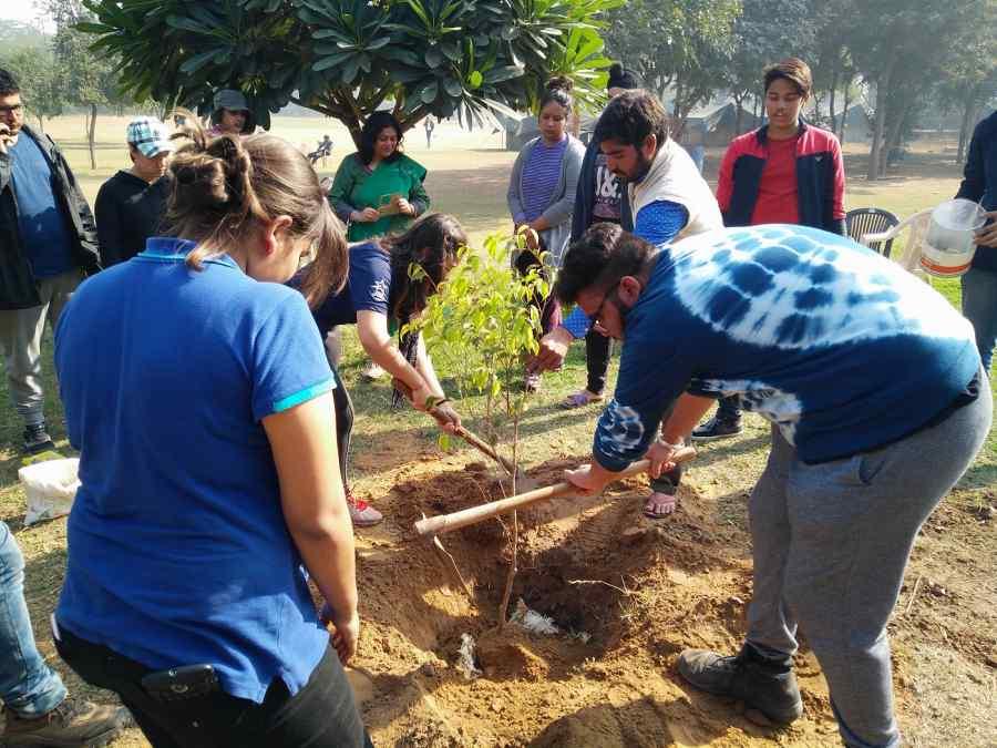Tree_plantation  506