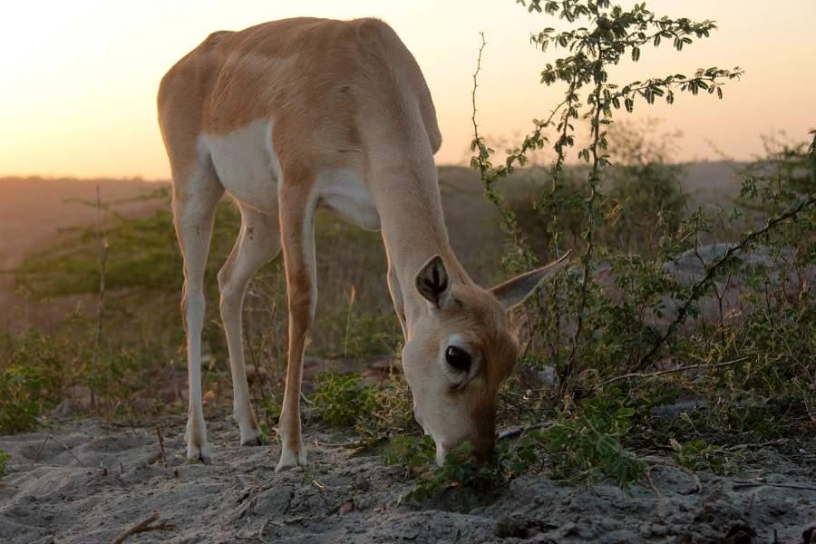 deer 503